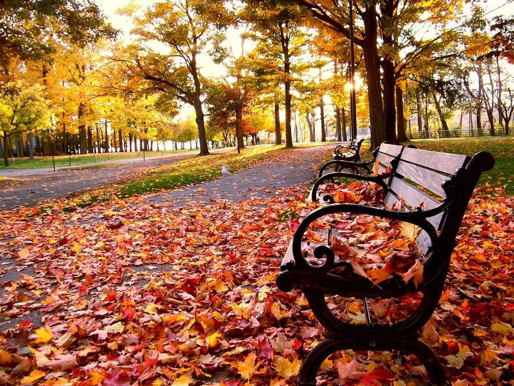Resultado de imagem para outono